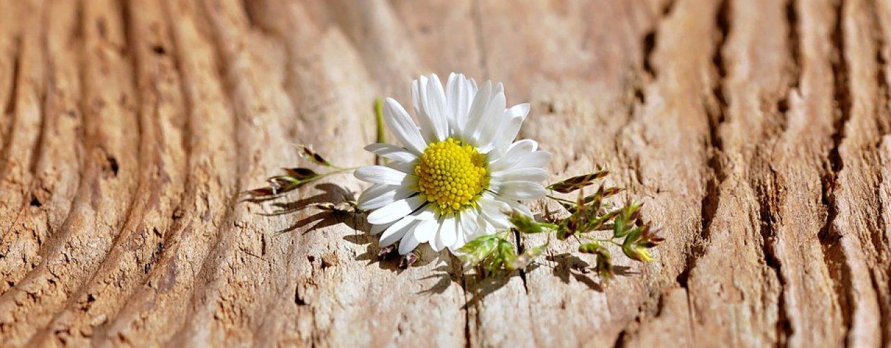 flower_747367_960_720_22
